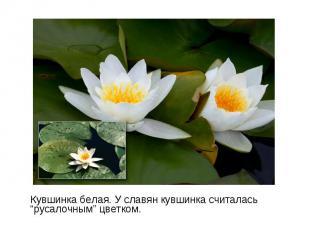 "Кувшинка белая. У славян кувшинка считалась ""русалочным"" цветком. Кувшинка белая"