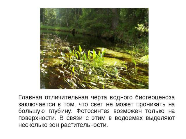 Главная отличительная черта водного биогеоценоза заключается в том, что свет не может проникать на большую глубину. Фотосинтез возможен только на поверхности. В связи с этим в водоемах выделяют несколько зон растительности. Главная отличительная чер…