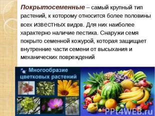 Покрытосеменные – самый крупный тип Покрытосеменные – самый крупный тип растений