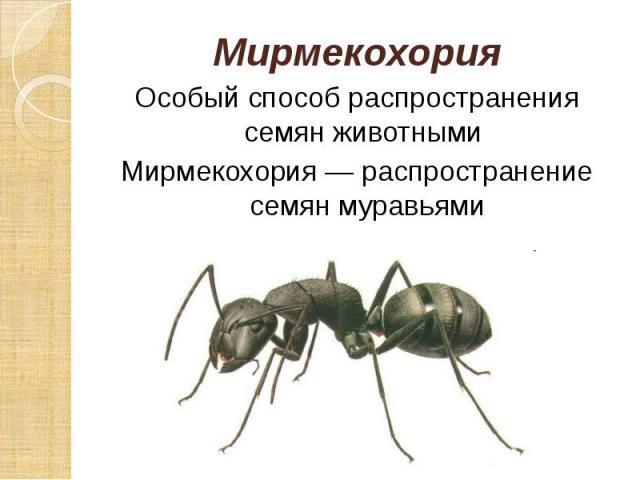 Мирмекохория Мирмекохория Особый способ распространения семян животными Мирмекохория — распространение семян муравьями