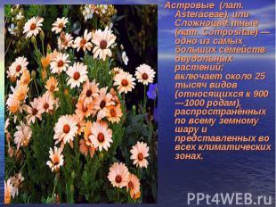 Астровые (лат. Asteráceae), или Сложноцве тные (лат. Compósitae) — одно из самых