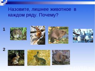 Назовите, лишнее животное в каждом ряду. Почему?