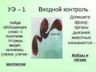 Допишите фразу: органы дыхания животных называются - Допишите фразу: органы дыха