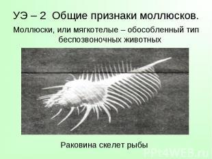 Моллюски, или мягкотелые – обособленный тип беспозвоночных животных Моллюски, ил