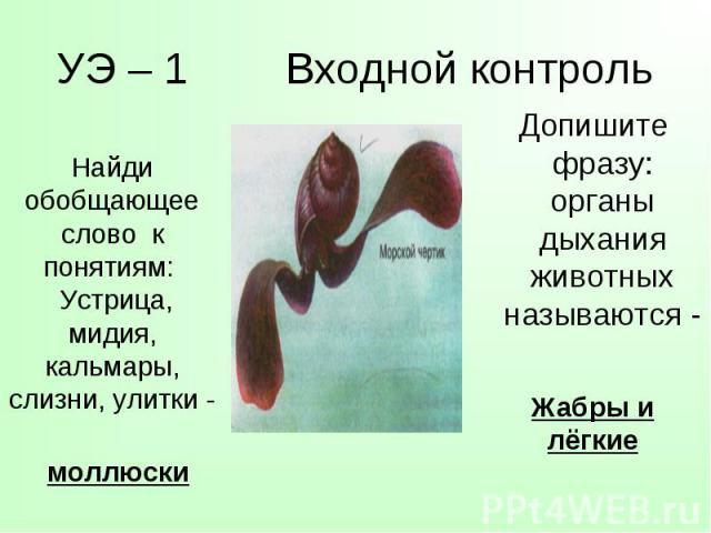 Допишите фразу: органы дыхания животных называются - Допишите фразу: органы дыхания животных называются -