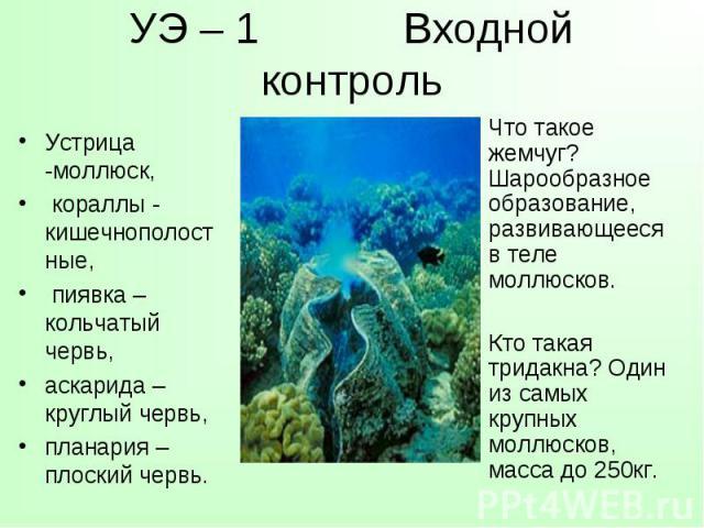 Устрица -моллюск, кораллы - кишечнополостные, пиявка – кольчатый червь, аскарида – круглый червь, планария – плоский червь.