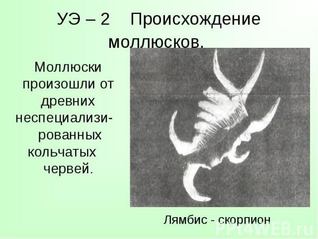 Моллюски произошли от древних неспециализи- рованных кольчатых червей. Моллюски произошли от древних неспециализи- рованных кольчатых червей.