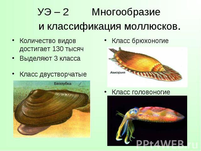 Количество видов достигает 130 тысяч Количество видов достигает 130 тысяч Выделяют 3 класса