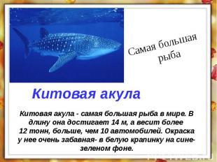Китовая акула - самая большая рыба в мире. В длину она достигает 14 м, а весит б