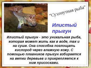 Илистый прыгун - это уникальная рыба, которая может жить как в воде, так и на су