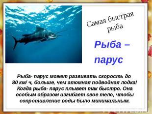 Рыба- парус может развивать скорость до 80 км/ ч, больше, чем атомная подводная