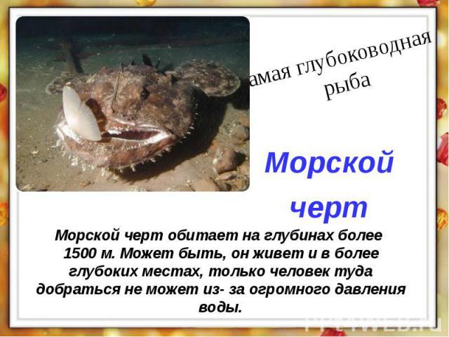 Морской черт обитает на глубинах более 1500 м. Может быть, он живет и в более глубоких местах, только человек туда добраться не может из- за огромного давления воды.