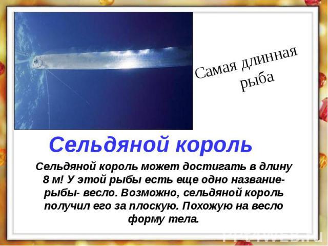 Сельдяной король может достигать в длину 8 м! У этой рыбы есть еще одно название- рыбы- весло. Возможно, сельдяной король получил его за плоскую. Похожую на весло форму тела.