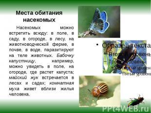 Места обитания насекомых Насекомых можно встретить всюду: в поле, в саду, в огор