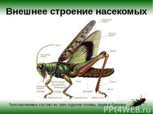 Внешнее строение насекомых Тело насекомых состоит из трех отделов головы, груди