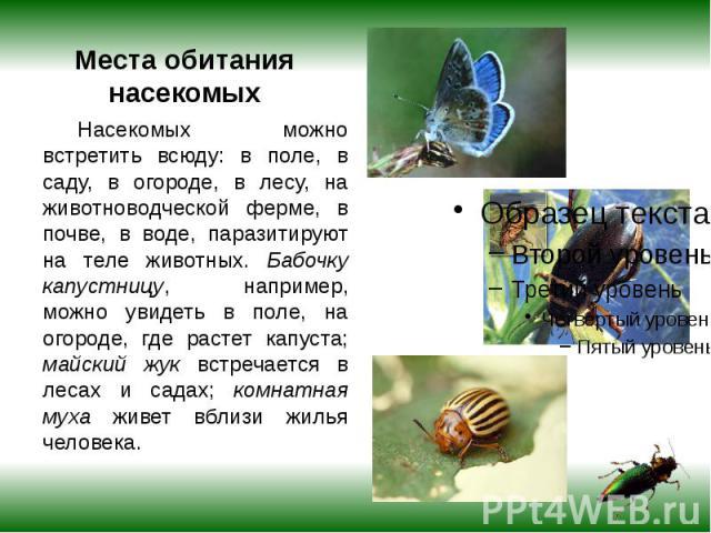Места обитания насекомых Насекомых можно встретить всюду: в поле, в саду, в огороде, в лесу, на животноводческой ферме, в почве, в воде, паразитируют на теле животных. Бабочку капустницу, например, можно увидеть в поле, на огороде, где растет капуст…