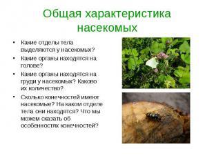 Какие отделы тела выделяются у насекомых? Какие отделы тела выделяются у насеком