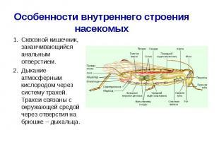 Сквозной кишечник, заканчивающийся анальным отверстием. Сквозной кишечник, закан