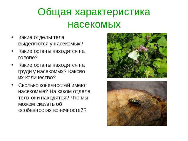 Какие отделы тела выделяются у насекомых? Какие отделы тела выделяются у насекомых? Какие органы находятся на голове? Какие органы находятся на груди у насекомых? Каково их количество? Сколько конечностей имеют насекомые? На каком отделе тела они на…