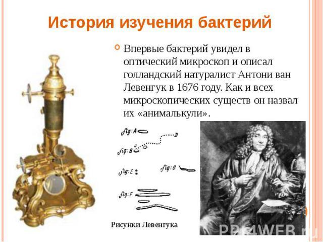 Впервые бактерий увидел в оптический микроскоп и описал голландский натуралист Антони ван Левенгук в 1676 году. Как и всех микроскопических существ он назвал их «анималькули». Впервые бактерий увидел в оптический микроскоп и описал голландский натур…