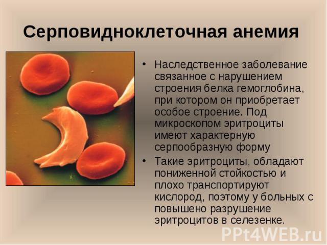 Наследственное заболевание связанное с нарушением строения белка гемоглобина, при котором он приобретает особое строение. Под микроскопом эритроциты имеют характерную серпообразную форму Наследственное заболевание связанное с нарушением строения бел…
