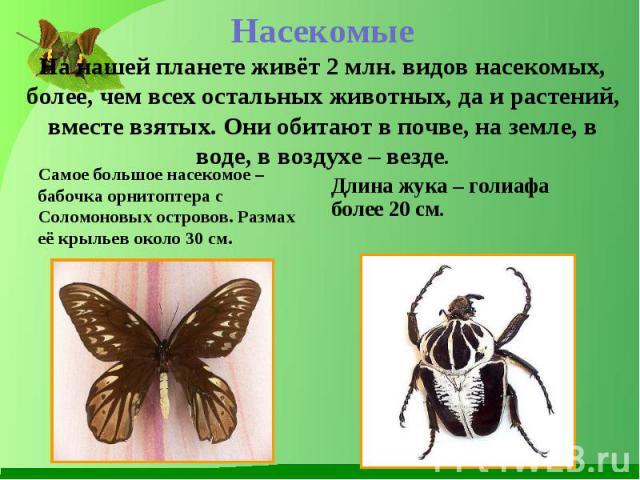 Самое большое насекомое – бабочка орнитоптера с Соломоновых островов. Размах её крыльев около 30 см. Самое большое насекомое – бабочка орнитоптера с Соломоновых островов. Размах её крыльев около 30 см.