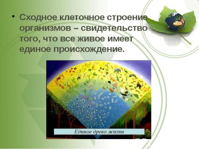Сходное клеточное строение организмов – свидетельство того, что все живое имеет единое происхождение. Сходное клеточное строение организмов – свидетельство того, что все живое имеет единое происхождение.