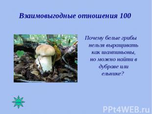 Почему белые грибы нельзя выращивать как шампиньоны, но можно найти в дубраве ил
