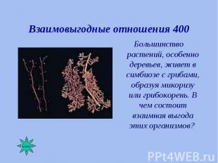 Большинство растений, особенно деревьев, живет в симбиозе с грибами, образуя мик