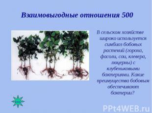 В сельском хозяйстве широко используется симбиоз бобовых растений (гороха, фасол