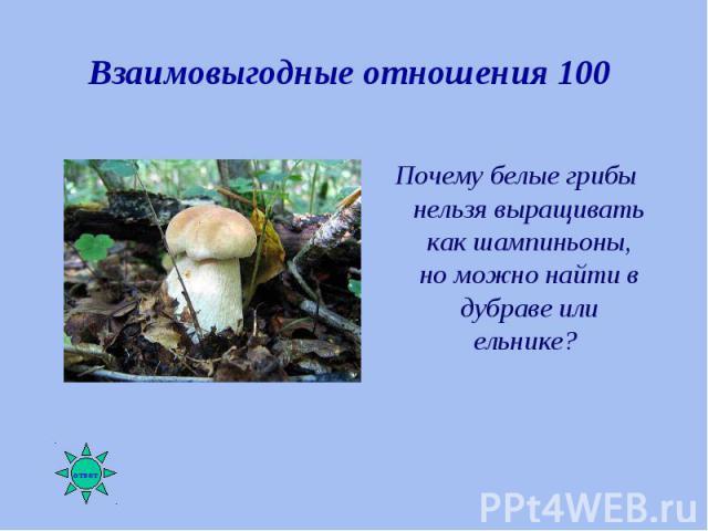 Почему белые грибы нельзя выращивать как шампиньоны, но можно найти в дубраве или ельнике? Почему белые грибы нельзя выращивать как шампиньоны, но можно найти в дубраве или ельнике?