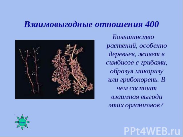 Большинство растений, особенно деревьев, живет в симбиозе с грибами, образуя микоризу или грибокорень. В чем состоит взаимная выгода этих организмов? Большинство растений, особенно деревьев, живет в симбиозе с грибами, образуя микоризу или грибокоре…