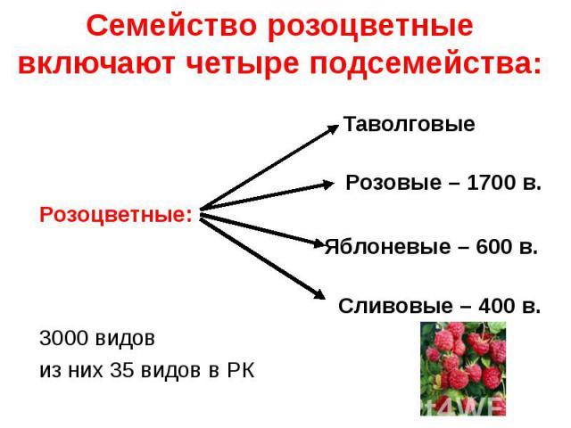 Таволговые Таволговые Розовые – 1700 в. Розоцветные: Яблоневые – 600 в. Сливовые – 400 в. 3000 видов из них 35 видов в РК