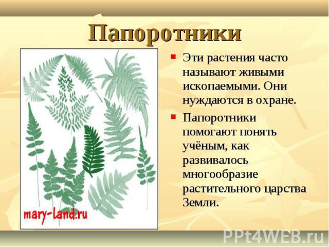 Эти растения часто называют живыми ископаемыми. Они нуждаются в охране. Эти растения часто называют живыми ископаемыми. Они нуждаются в охране. Папоротники помогают понять учёным, как развивалось многообразие растительного царства Земли.