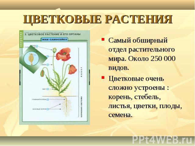 Самый обширный отдел растительного мира. Около 250 000 видов. Самый обширный отдел растительного мира. Около 250 000 видов. Цветковые очень сложно устроены : корень, стебель, листья, цветки, плоды, семена.