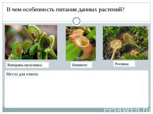 В чем особенность питания данных растений?