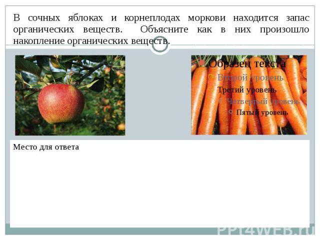 В сочных яблоках и корнеплодах моркови находится запас органических веществ. Объясните как в них произошло накопление органических веществ.