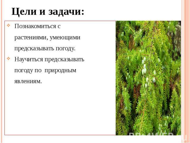 Цели и задачи: Познакомиться с растениями, умеющими предсказывать погоду. Научиться предсказывать погоду по природным явлениям.