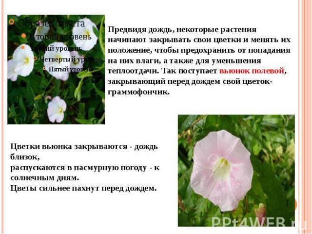 Предвидя дождь, некоторые растения начинают закрывать свои цветки и менять их положение, чтобы предохранить от попадания на них влаги, а также для уменьшения теплоотдачи. Так поступает вьюнок полевой, закрывающий перед дождем свой цветок-граммофончик.