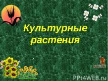 Презентация на тему Культурные растения скачать бесплатно  Культурные растения