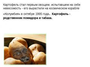 Картофель стал первым овощем, испытавшем на себе невесомость - его вырастили на