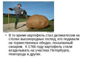 В то время картофель стал деликатесом на столах высокородных господ, его подавал