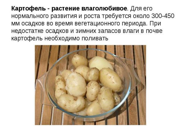Картофель - растение влаголюбивое. Для его нормального развития и роста требуется около 300-450 мм осадков во время вегетационного периода. При недостатке осадков и зимних запасов влаги в почве картофель необходимо поливать