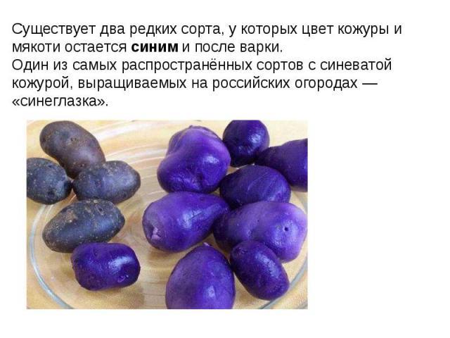 Существует два редких сорта, у которых цвет кожуры и мякоти остается синим и после варки. Один из самых распространённых сортов с синеватой кожурой, выращиваемых на российских огородах — «синеглазка».