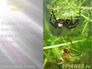 Водяные пауки Водные пауки или подводные пауки населяют пруды в Северной и Центр