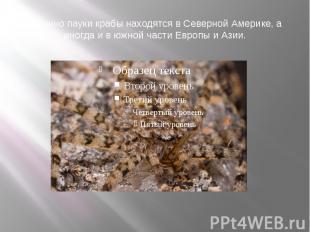 Обычно пауки крабы находятся в Северной Америке, а иногда и в южной части Европы