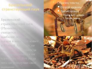 Бразильский странствующий паук Бразильский странствующий паук (Phoneutria nigriv