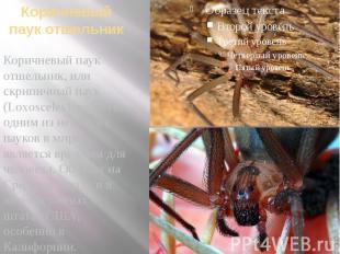 Коричневый паук отшельник Коричневый паук отшельник, или скрипичный паук (Loxosc