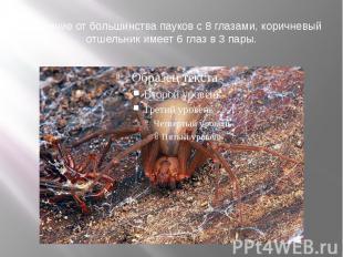 В отличие от большинства пауков с 8 глазами, коричневый отшельник имеет 6 глаз в