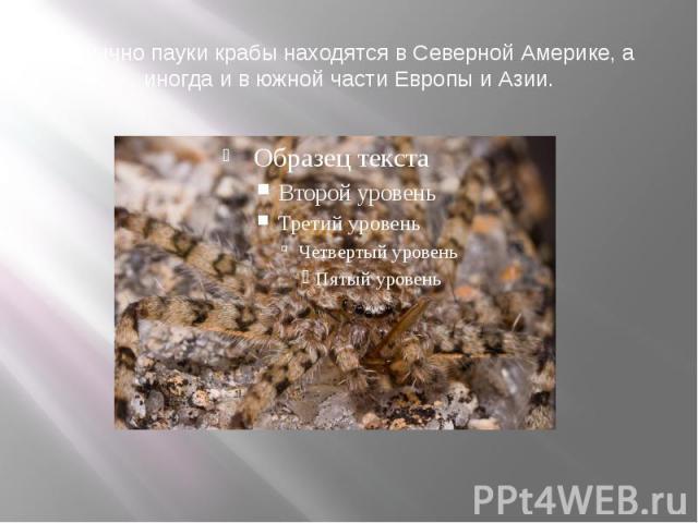 Обычно пауки крабы находятся в Северной Америке, а иногда и в южной части Европы и Азии.